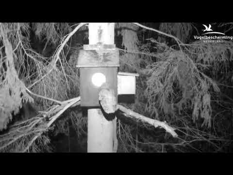 25.02.18 (Männchen ruft nach Weibchen)