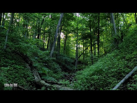 Life in 8K - Impressive forest landscape at the famous Bruce Trail