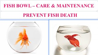 Fish Bowl - Care & Maintenance | Save Fishes in Bowl