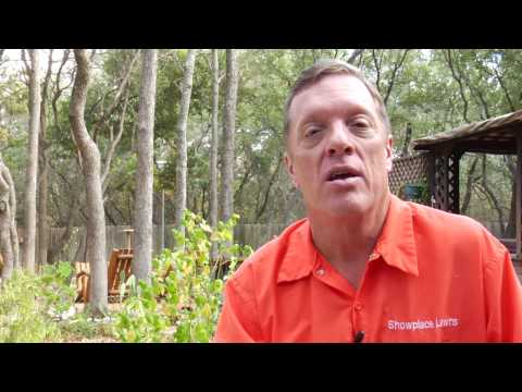 Video Lawn Care Tips : How to Remove Grass Fungus