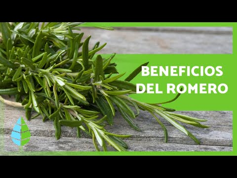 ¿Para Qué Sirve El Romero? Propiedades y Beneficios