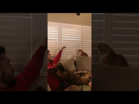 החתול שרצה את התריס סגור - סרטון מצחיק ביותר