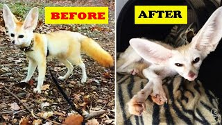 Vegan woman forced her fox pet to go vegan, and here's what happened