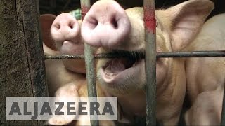 Gambar cover Hong Kong food safety under fire after pork scandal