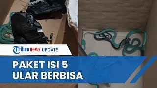 Jasa Ekspedisi di Bandung Heboh Temukan Paket Isi 5 Ular Berbisa, Hendak Diselundupkan ke Inggris