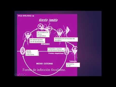 Parazita körömféreg tünetek