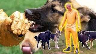 i covered myself in peanut butter and went to a dog park