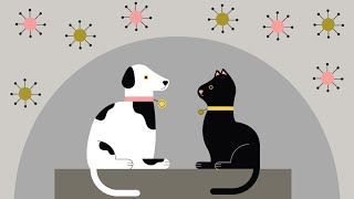 Can animals catch and spread coronavirus? Latest advice for pet owners