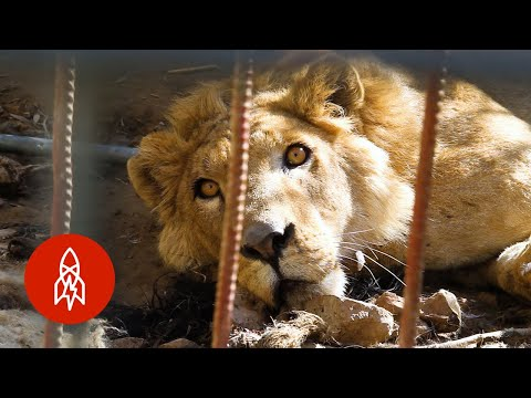 Rescuing Zoo Animals Trapped in War Zones