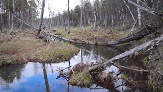 Ловля щуки на лесных реках весной