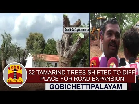 33-Tamarind-Trees-shifted-to-different-place-for-Road-expansion-in-Erode-Thanthi-TV