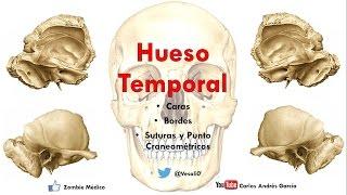 Anatomía - Hueso Temporal (Escama, Peñasco, Procesos Mastoideos)