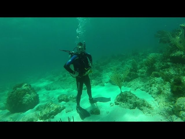 Diving The Reef!