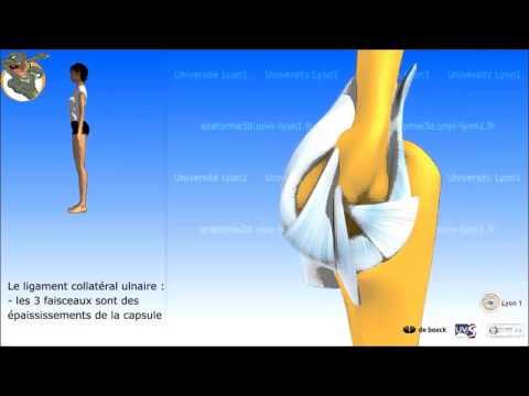 Lartrosi delle articolazioni delle dita