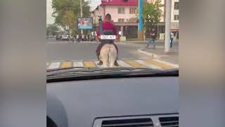 Водителя осла с крутым номером сняли в Алматы