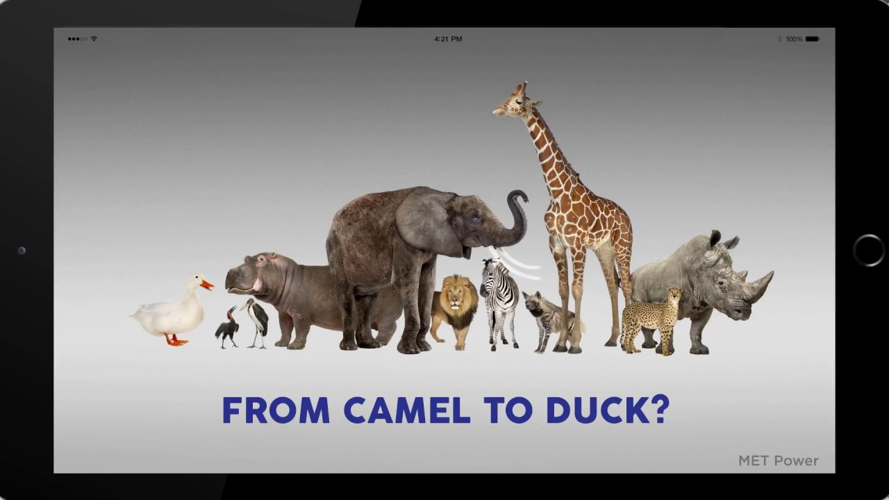 From Camel to Duck?