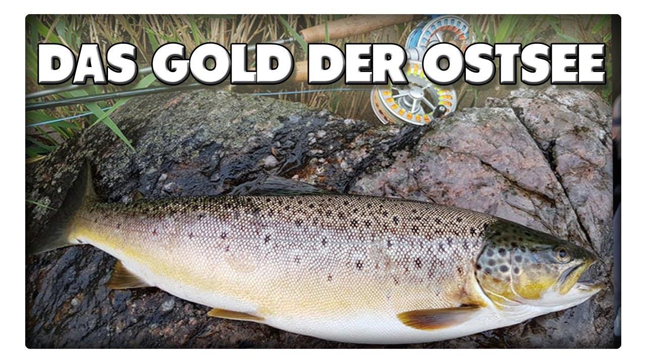 Im Sommer auf Meerforelle angeln - Das Gold der Ostsee