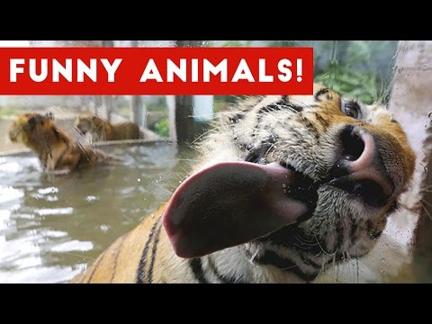 Funniest Pet & Animal Bloopers & Reactions Compilation October 2016   Funny Pet Videos