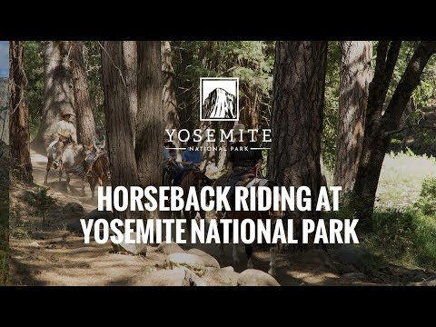 Trail Rides in Yosemite National Park