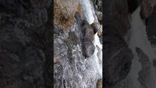 iphone 7 подводная съемка в горной рек