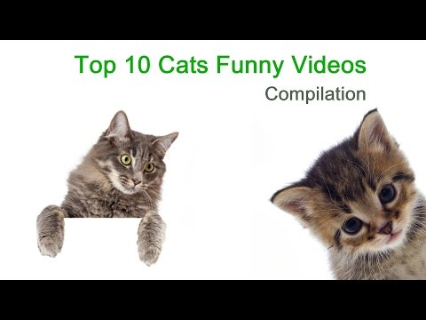 Top 10 Cats Funny Video Compilation- Pets, Animals, Cat Videos