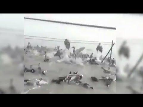 The booming bird poaching trade in Iran