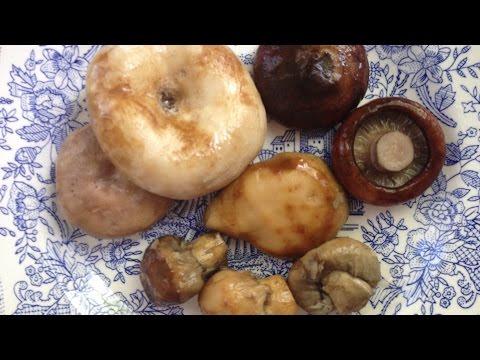 Фото Сбор и засолка грибов: грузди, валуи, часть 1