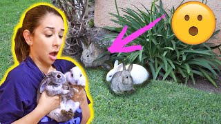 RESCUING BABY BUNNIES STUCK UNDER A HOUSE! 😱😭