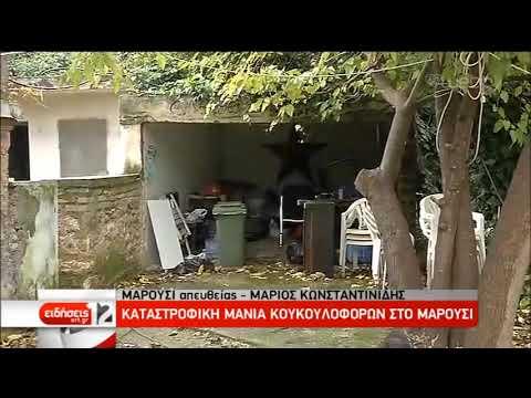 Σφραγίζει με λαμαρίνες την είσοδο της έπαυλης Κούβελου η ΕΛ.ΑΣ. | 23/12/2019 | ΕΡΤ