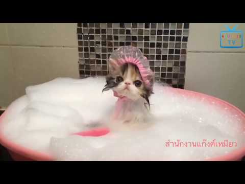 Funny Animal Mating - Top 15 Cutest Kittens In The World