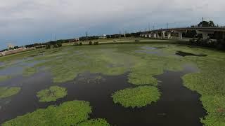 Lilly pad pond - DJI FPV