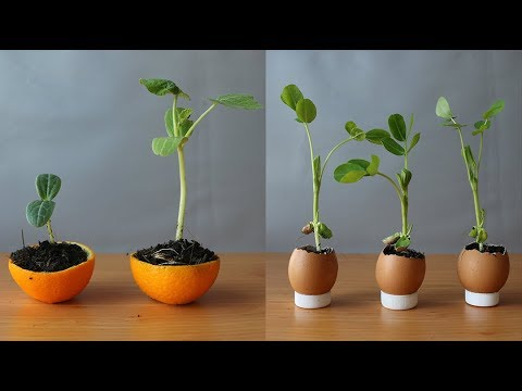 11 mẹo làm vườn này sẽ thổi bồng ý tưởng cho bạn | 11 gardening tips will inflame ideas for you