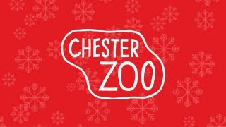 preview picture of video 'In the twelve months to Christmas Chester Zoo gave to me...'