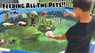 Feeding ALL the EXOTIC PETS!!