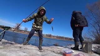 Ранняя весенняя рыбалка! ФИДЕР! Ловим стрижку! Учим вязать снасть!