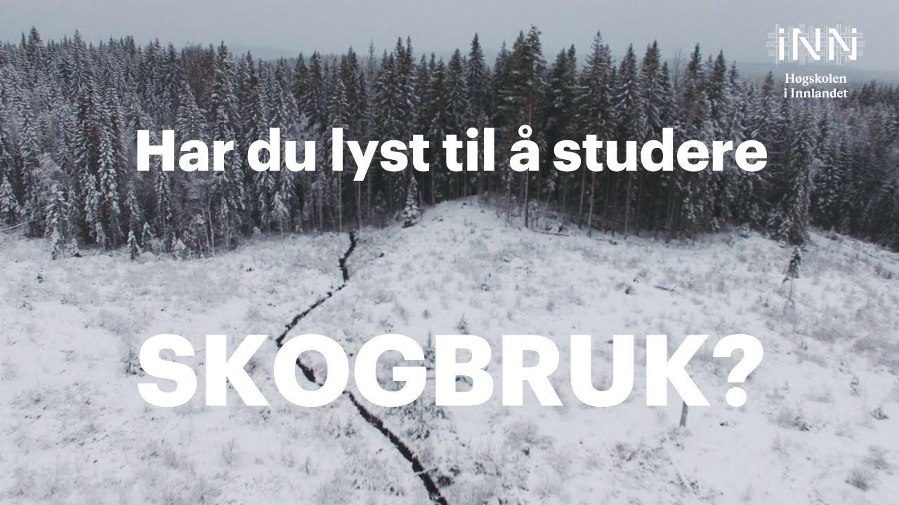 Har du lyst til å studere skogbruk?