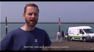 Shellfish reefs in the North Sea