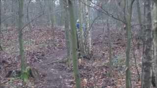 Elsecar Woods Freeride
