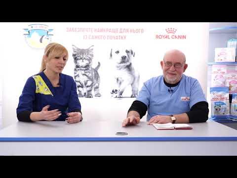 Гемобартонеллез кошек. Симптомы, лечение и профилактика