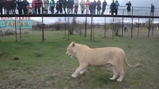 Ребята из ТВЦ среди львов!