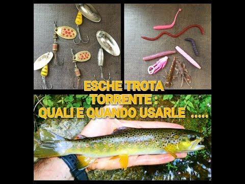 Compriamo il pasto composto per pesca