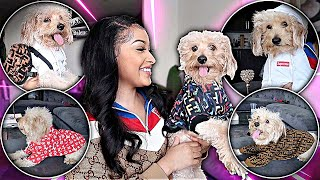 MY DOG (Fendi) TRIES ON NEW DESIGNER OUTFITS! (Gucci, LV, Chanel, etc.)