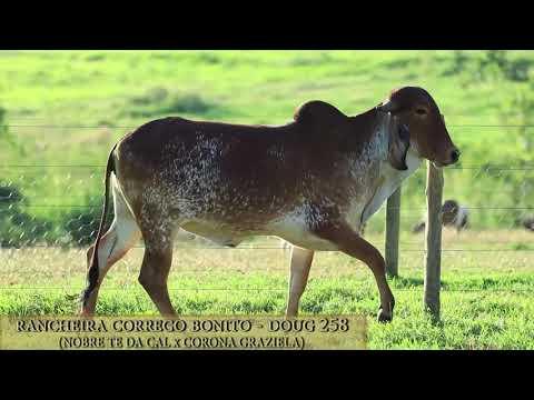 Rancheira Córrego Bonito - DOUG 258