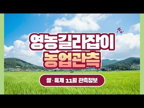 [영농길라잡이 농업관측] 쌀, 육계 11월 관측 이미지