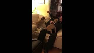 animale cainii iubitori