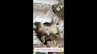 International Cat Day Taylor Swift Instagram Stories
