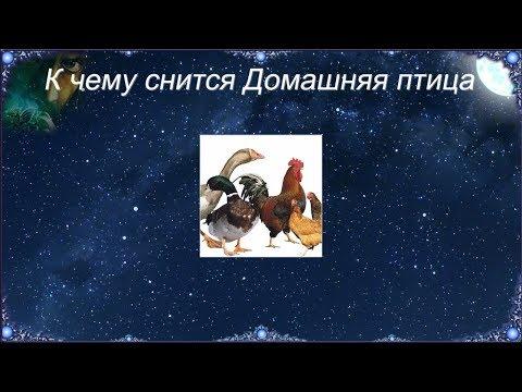 К чему снится Домашняя птица (Сонник)