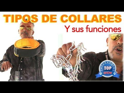 TIPOS DE COLLARES PARA PERROS Y SUS FUNCIONES