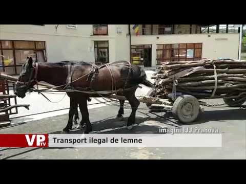 Transport ilegal de lemne