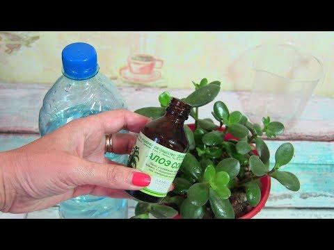 Подкормка для буйного роста и цветения комнатных растений